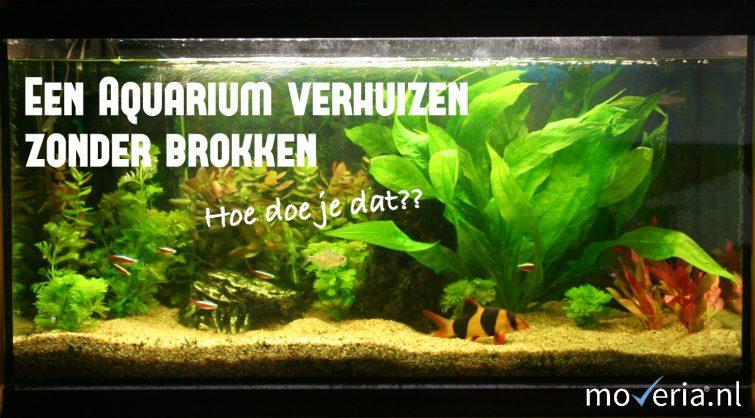 aquarium verhuizen