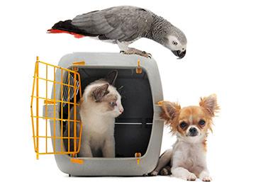huisdieren verhuis